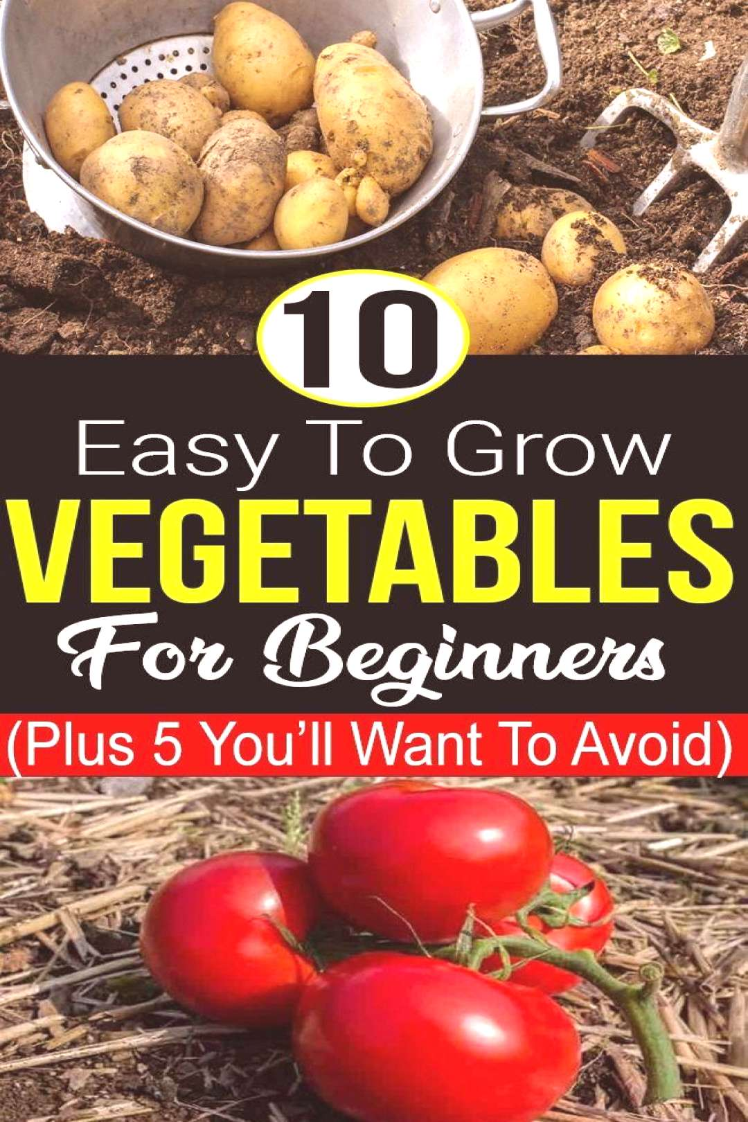 Growing your own vegetables in your garden is fun as well as scary when you don't know h