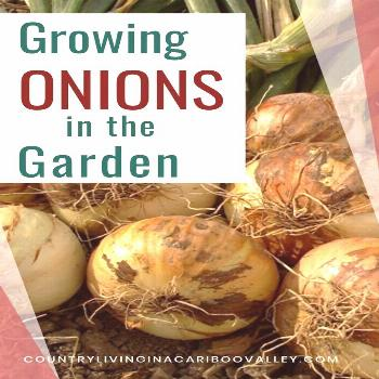 Onions are so easy to grow! Great for small gardens or containers on the patio. Here's what you