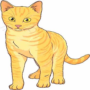 Orange kitten with yellow eyes standing and looking ahead