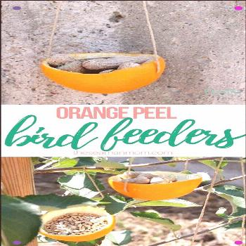 Orange Bird Feeder - Why Go Out And Buy An Expensive Bird Feeder When You Can Make One Yourself? Th