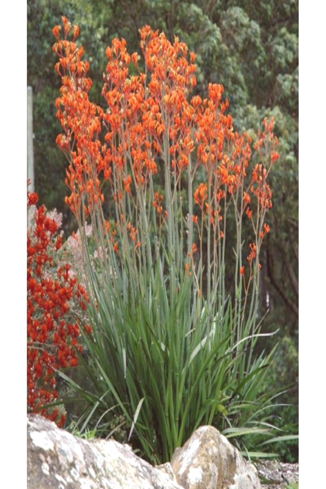 Colorful landscaping ideas with low maintenance flower bushes - Colorful landscaping with low-maint