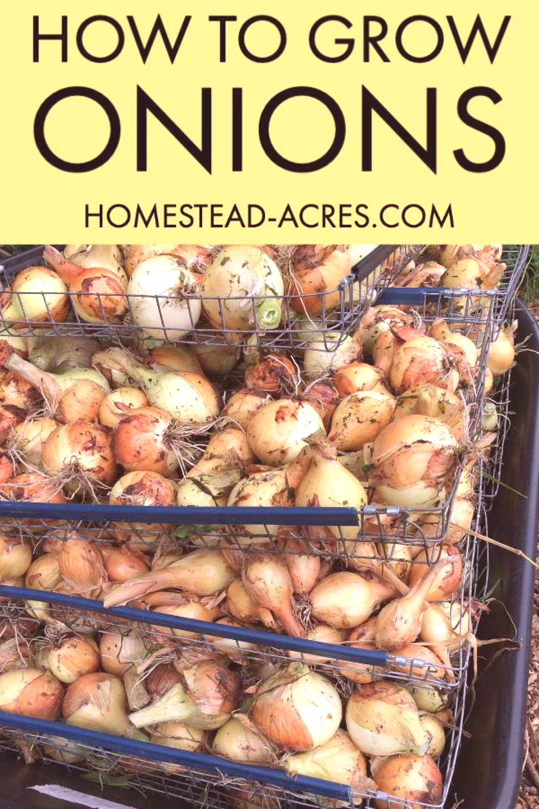 How To Grow Onions How to grow onions in your backyard garden. Yes you can easily grow lots of onio