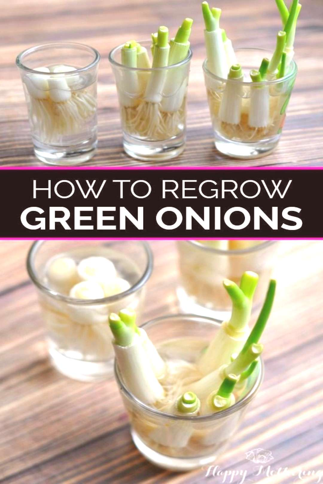 How to Re-Grow Green Onions#green