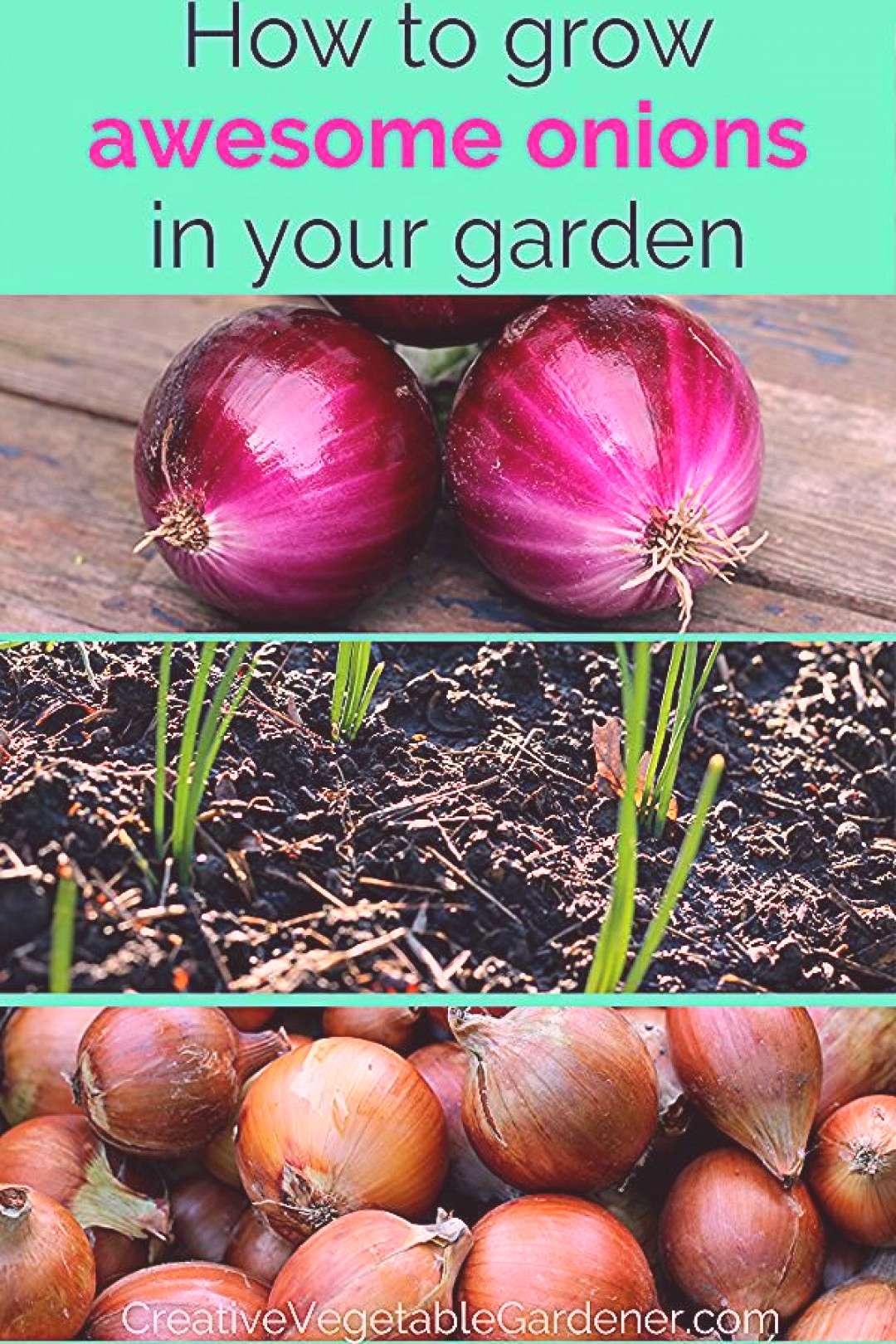 Ultimate Guide to Growing Awesome Onions Growing and planting onions successfully can be a challeng